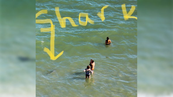 Unnerving photos reveal sharks just feet from unsuspecting beach-goers