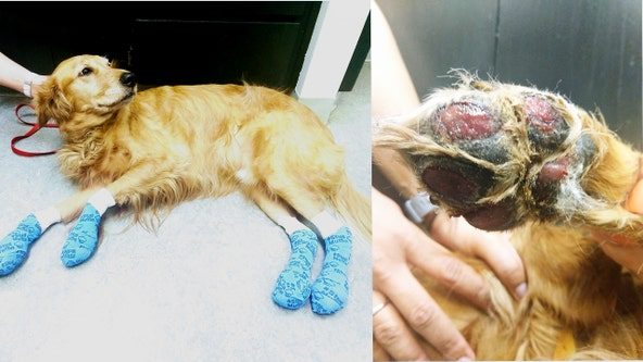 Vet issues summer walk warning after treating dog with burned off paw pads