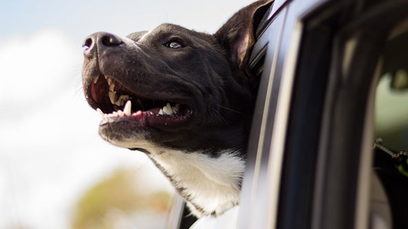 Pennsylvania police remind pet owners about 'hot car bill'