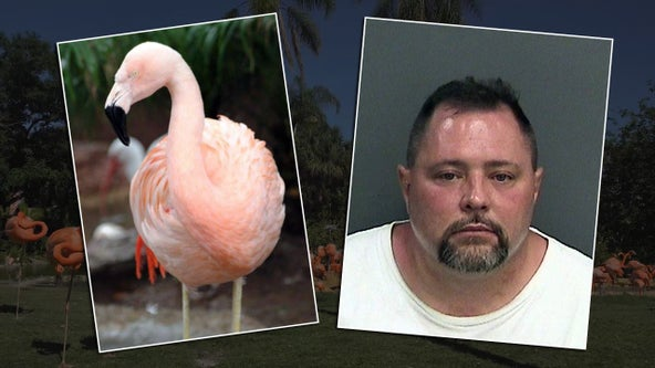 Man accused of killing Busch Gardens' famous flamingo hit by truck, killed in Orlando