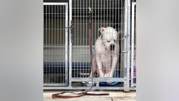 Heartbreaking photo of dog left at shelter by family goes viral
