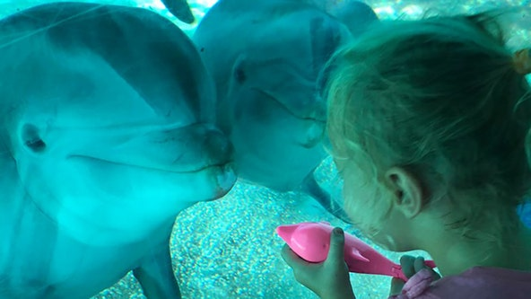 Toddler with dolphin toy has sweet encounter with real dolphins at SeaWorld Orlando