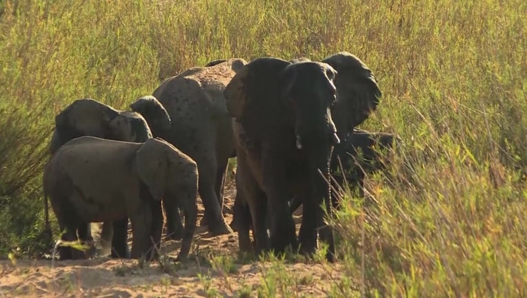 One of Africa's largest wildlife preserves is marking a year without a single elephant found killed by poachers