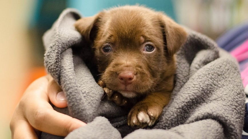 How to help local animal shelters during the COVID-19 pandemic