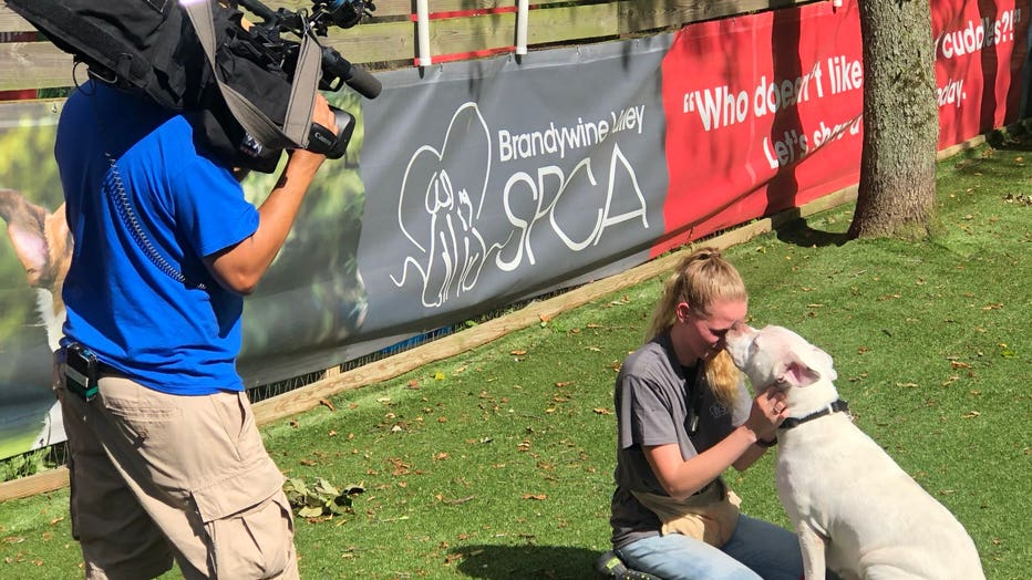Brandywine Valley SPCA Mega Adoption Event: More than 1,000
