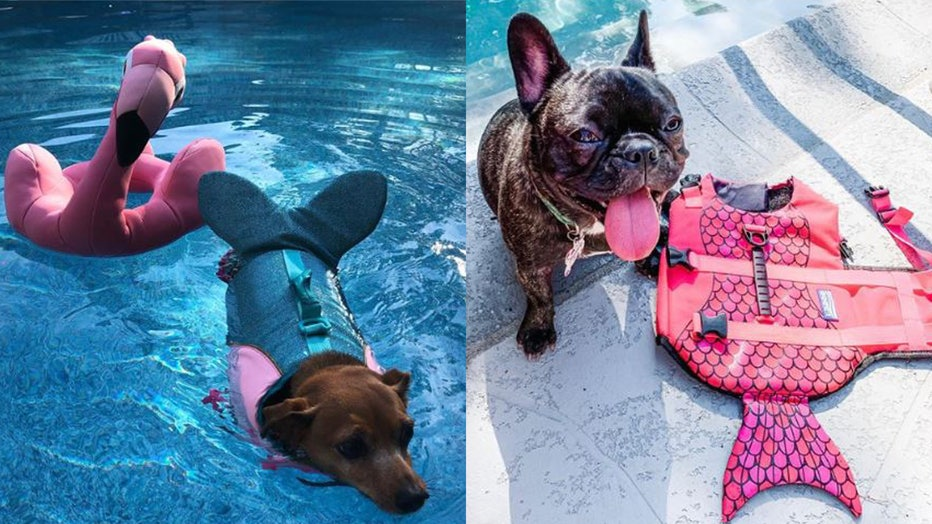 Why should your dog just be a dog when he can be a mermaid?