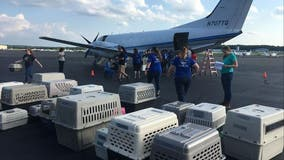 Volunteers rush to transport shelter animals threatened by Barry out of storm's path