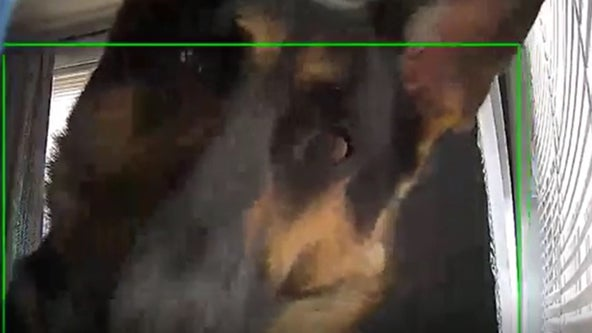 Dog hilariously sets off motion detection camera in viral video