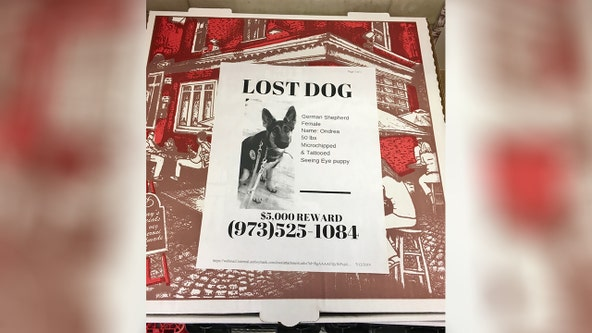 Pizzeria puts flyers of lost pets on pizza boxes, encourages other shops to do the same