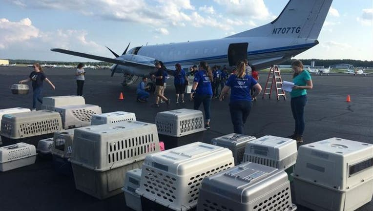 A multi-state rescue effort helped secure and transport more than 120 cats and dogs to safety on Friday.