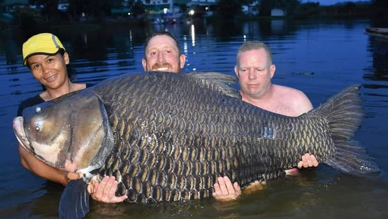 A British man catches reportedly record-breaking size fish.