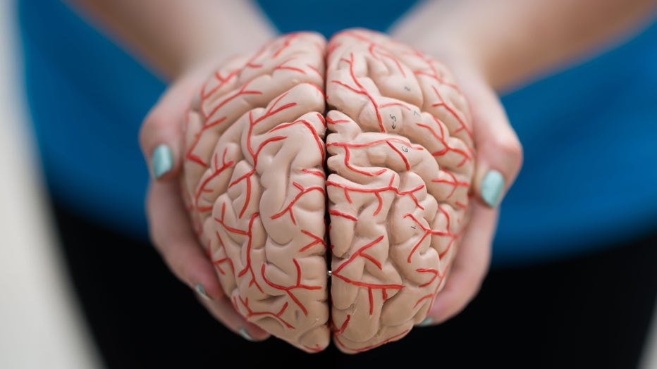 A woman holds a model of a human brain in her hands on June 1, 2019 in Cardiff, United Kingdom. (Photo by Matthew Horwood/Getty Images)
