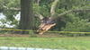 7 adults, 2 children injured after tree falls at Bucks County swim club