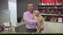 Dogs, cats seek furever homes at Brandywine Valley SPCA
