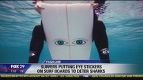 Surfers using 'big eye' stickers on boards to deter sharks