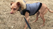 Canadian family offers $500 reward in search for lost puppy in Kensington