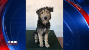 Dog adopted from Phoenix animal shelter gets big break in upcoming Disney movie