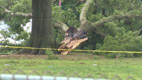 7 adults, 2 children injured after tree falls at Bucks County swim club
