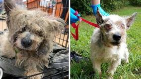 Sick dog found abandoned in plastic bin on Bucks County highway; $3K reward offered