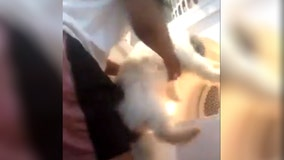 Police identify teen girl in dryer video, dog evaluated by vet