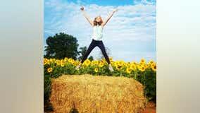 Instagram-worthy 'Sunflower Festival' kicks off at Bucks County farm