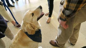 Service dogs travel to El Paso to comfort victims and first responders