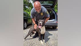 Officials: Dog found tied to train tracks in Delaware County