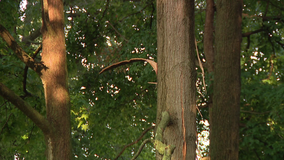 Officials: 2 injured after tree struck by lightning in Newark, Del.