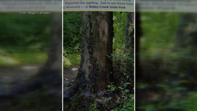 Invasive spotted lanternfly invading Delaware County park