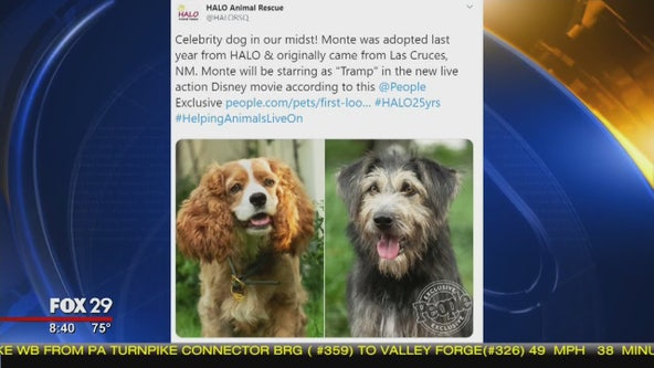 Dog adopted from animal shelter gets big break in upcoming Disney movie