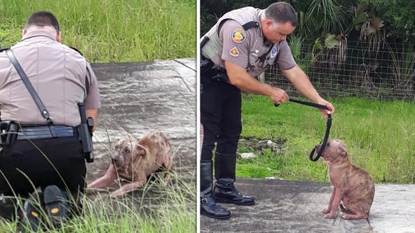 Dog rescued from I-275 getting second chance at life