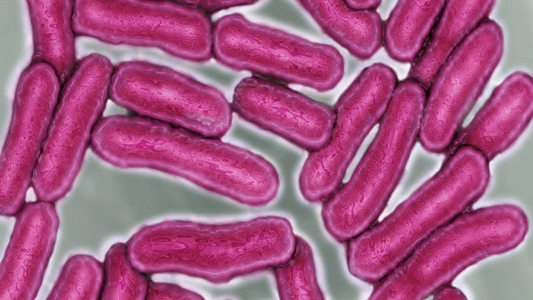 CDC warns of deadly drug-resistant salmonella after more than 250 people develop illness