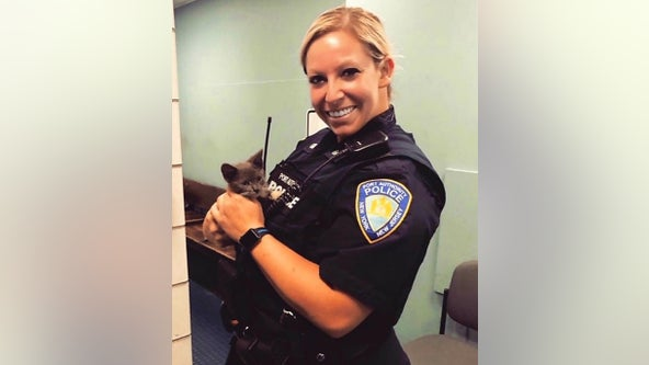 Kitten rescued after dodging traffic on George Washington Bridge