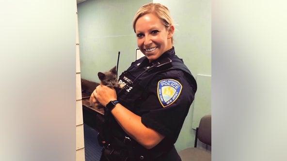 Kitten rescued after dodging traffic on George Washington Bridge