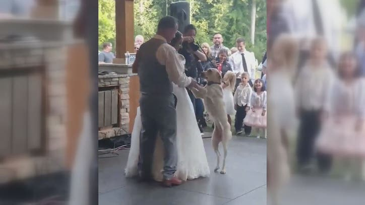 Newlyweds first dance with dog too