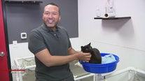 Furry friends seeking furever homes at Brandywine Valley SPCA