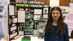 Montgomery County teen creates innovative spotted lanternfly trap out of foil, plastic