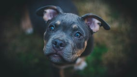 Delta revokes 8-hour flight limit for emotional support animals, but upholds ban on pit bulls
