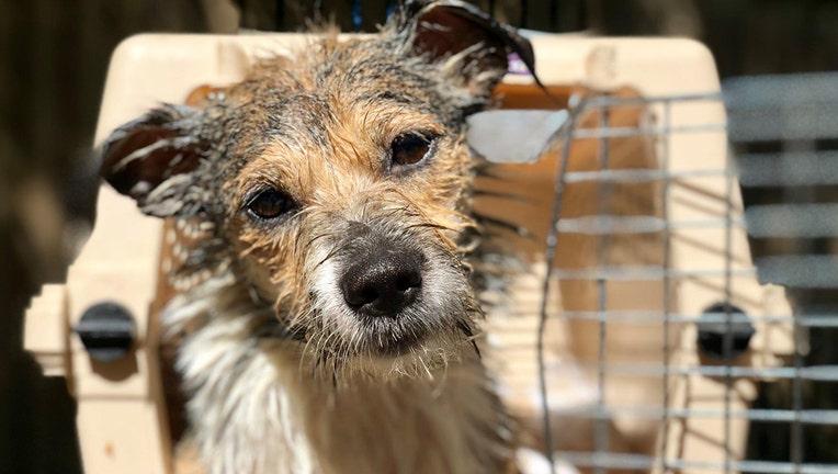 Brandywine Valley SPCA Dorian rescue
