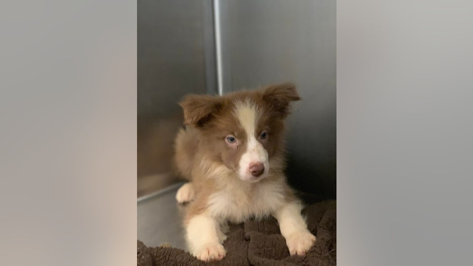 Animal welfare workers seize 55 dogs, puppies from Lancaster