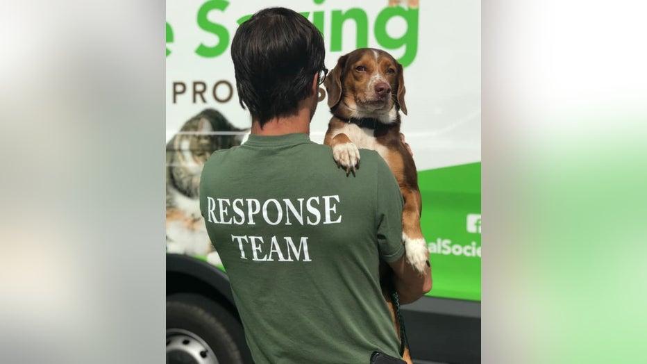 Charleston Animal Society Hurricane Dorian rescue