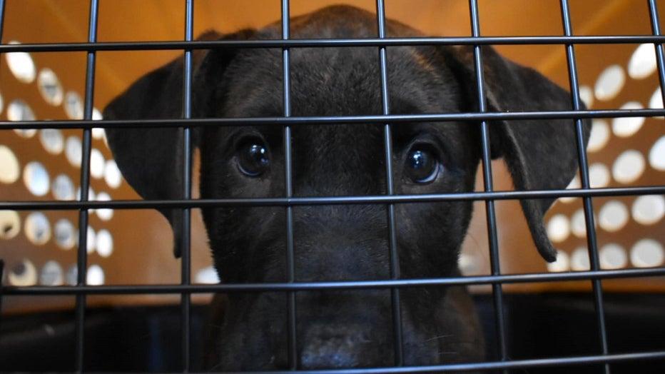 Greenville Humane Society Hurricane Dorian Rescue