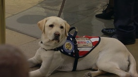 George H.W. Bush's service dog Sully receives Public Service Award