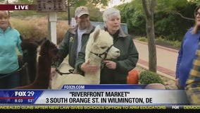 Town Takeover: Alpacas in Wilmington!