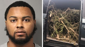 Delaware man arrested with 131 pounds of marijuana in stolen car, police say
