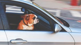 Uber Pet to launch in Philadelphia for animal-friendly rides