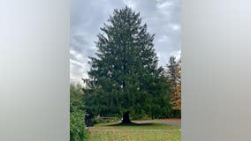 The Rockefeller Center Christmas Tree has been selected