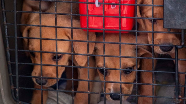 Brandywine SPCA rescues 54 dogs airlifted from Dorian-ravaged Bahamas