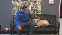 Furry friends seek furever homes at Brandywine Valley SPCA