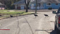 Hank's Take: Turkey trouble in Toms River